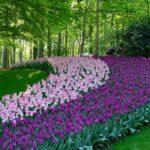 Keukenhof_Marylene1_Pixabay_hello-amsterdam.fr