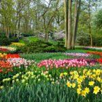 Keukenhof_gardens_Pixabay_hello-amsterdam.fr